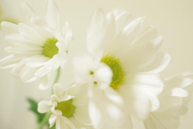 仏壇にお供えする花の画像3