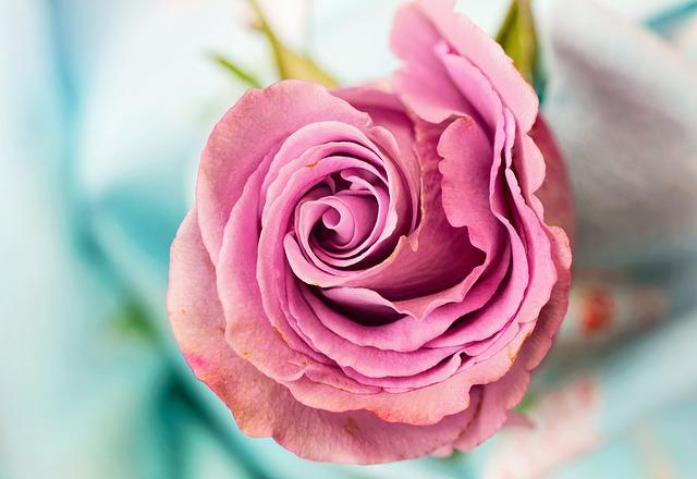 仏壇にお供えする花の画像4